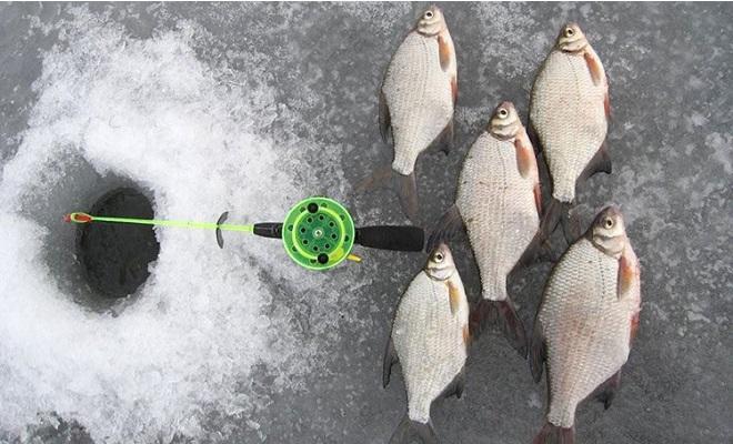 Пять пойманных лещей