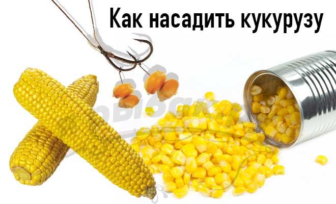 Кукуруза и рыболовный крючок