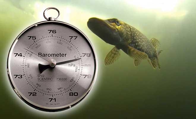Какое оптимальное атмосферное давление лучше для рыбалки